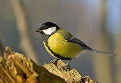 Cicle iniciacio ornitologia_m